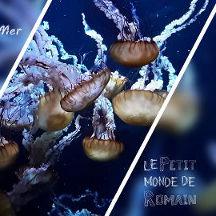 [Petit monde] Nausicaá - Centre National de la Mer